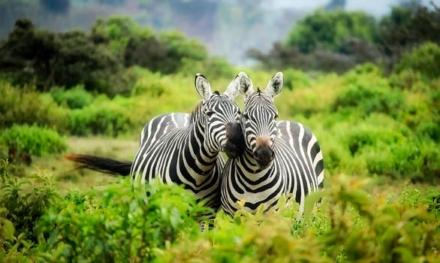Rejs til Afrika og få nye minder med hjem i baggagen