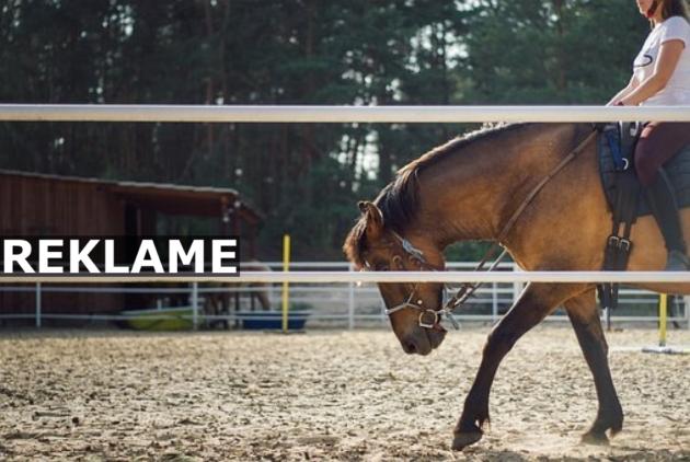Vil du være smart på hesten?